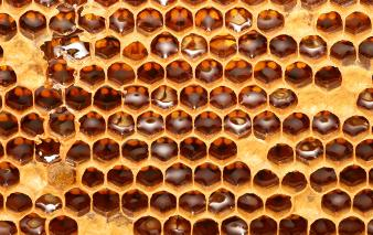 A cross section of beehive honeycomb